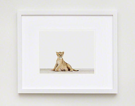 Lion Cub: 11X17