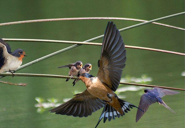 پَرَستوها و چلچلهها گروهی از پرندگان حشرهخوار گنجشکسان عضو تیرهٔ پرستویان (نام علمی: Hirundinidae) هستند که تاکنون ۷۴ گونه از آنها شناسایی شدهاند و در