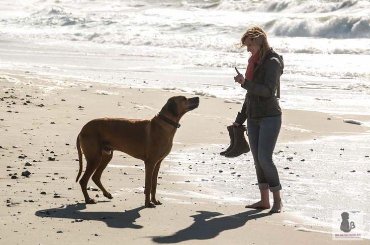 Urlaub mit Hund- alter Hund, was nun?