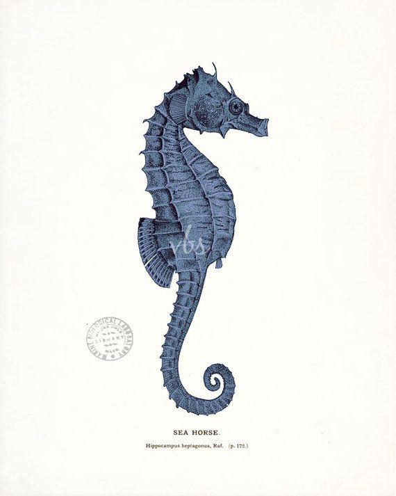 Ein wundervolles antikes Seepferdchen wird digital verbessert, gefärbt und auf einen leicht getönten Hintergrund gedruckt. Druckgröße: Der gezeigte Druck ist 8