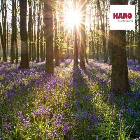 Haro padlók    Tavaszi ébredés az, mielőtt a fák feldíszítik magukat, lombkoronáikkal, és az aljnövényzet még kellő napsütéshez jut, és beboríthat mindent.    Nyomj egy lájkot, ha már te is elmentél kirándulni, és hasonló látvány fogadott! :)    www.dreamfloor.hu    #padló #laminált #parketta #construma