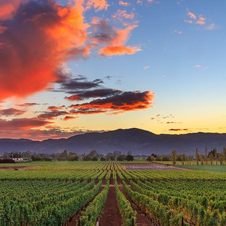 A nightly glass of vino is one of life's great pleasures. But traveling to the regions where those grapes are grown and tasting wines from gorgeous, sprawling vineyards--that's what dreams are made of. Here, the six vacations all wine lovers must take at least once in their lifetime.