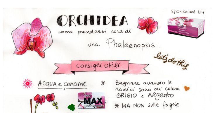 Blossom zine Orchidee.pdf