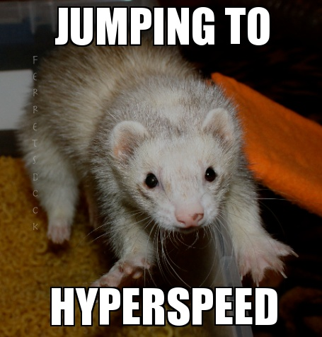 pin ferret meme on - photo #18