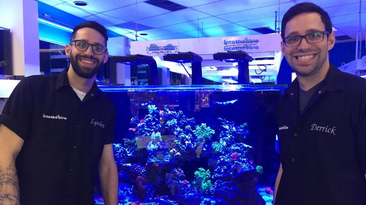 Aquarium business offers a taste of the ocean, in the middle of the prairies  ||  Into the Blue specializes in saltwater products ranging from fish and corals to pumps and tanks. The twin brothers who own the shop even offer an aquarium maintenance service for clients…