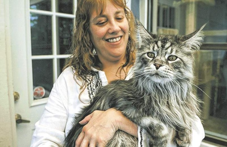 Reno feline Stewie certified as longest domestic cat ever. That is one ginormous cat!