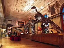 Sauriersaal im Naturhistorische Museum in Wien