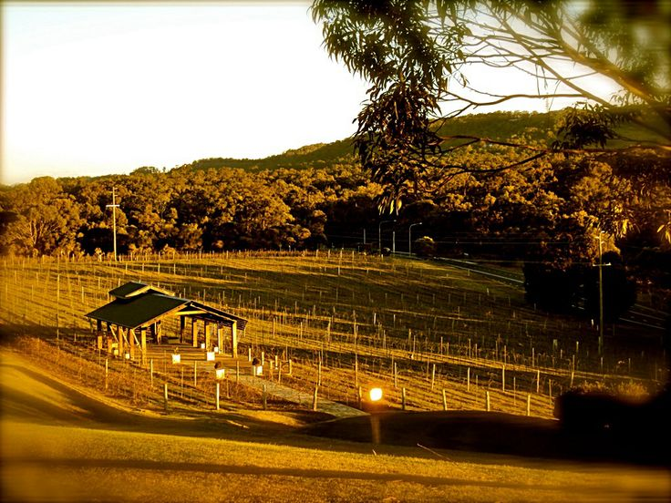 Sirromet Winery, winter time