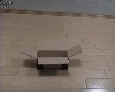 No box is too small for a cat... okay, this box is too small...FINALLY!! #GIF