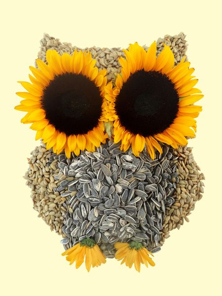 Hoot! Day Owl! by Marco Angeles.. would love to get this tattooed with a few more sunflowers around the owl.