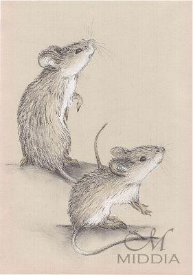Middia Lenormand. Project started III 2015 - Mice - Myszy