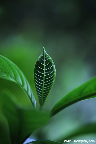 amazon rainforest plants. amazon rainforest animals names photo plant leaf indonesia plants