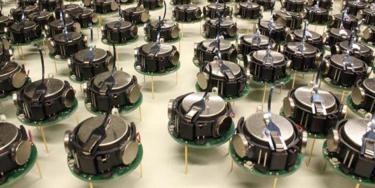 Los increíbles minirobots capaces de comportarse como un enjambre de abejas - Noticias de Tecnología
