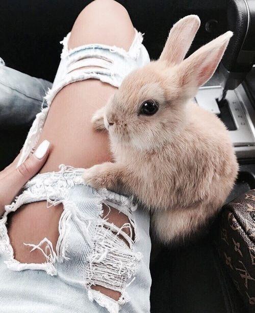 Ich brauche einen Hasen zu Ostern