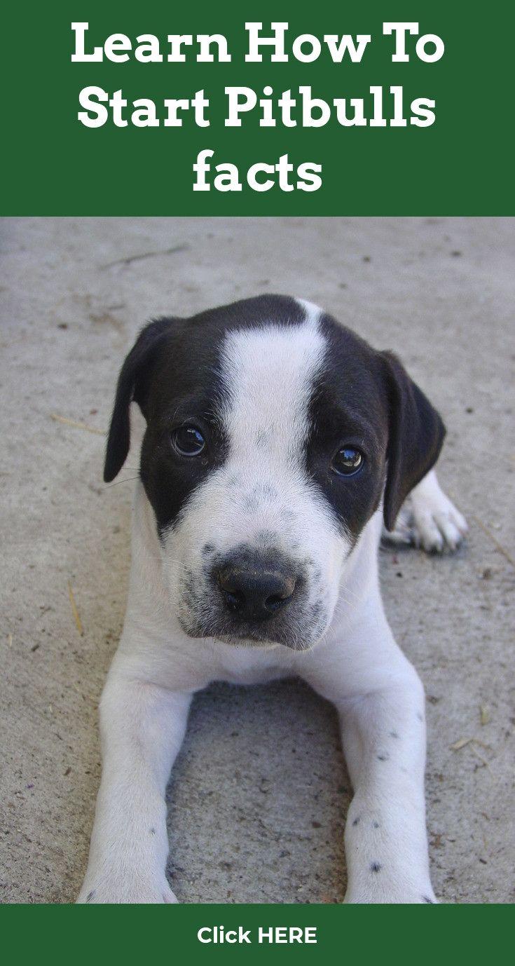 Pitbull Training Reasons Why You Should Train Your Pitbull Pitbull Dog Pitbulls Pitbull Training