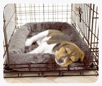 Best 25 Puppy Schedule Ideas On Pinterest Puppy Care