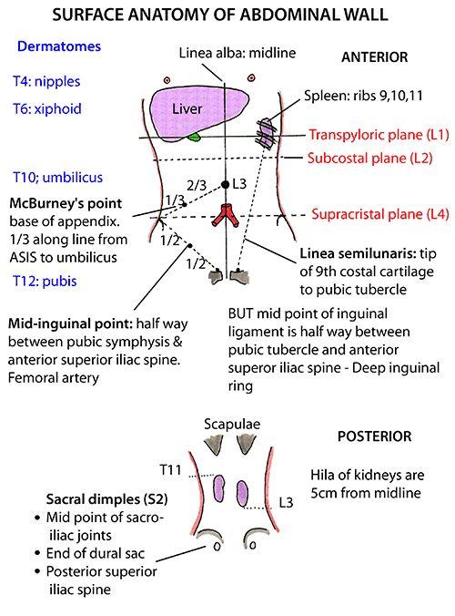 Instant Anatomy Abdomen Surface Abdominal Wall Medicine