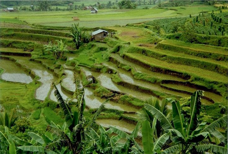 And the Minangkabau Highlands� rice fields, in West Sumatra. | 35 Gorgeous Pictures Of Indonesia That Will Take Your Breath Away
