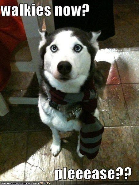 Husky memes | LOL dogs! | Pinterest | Husky, Husky meme ...