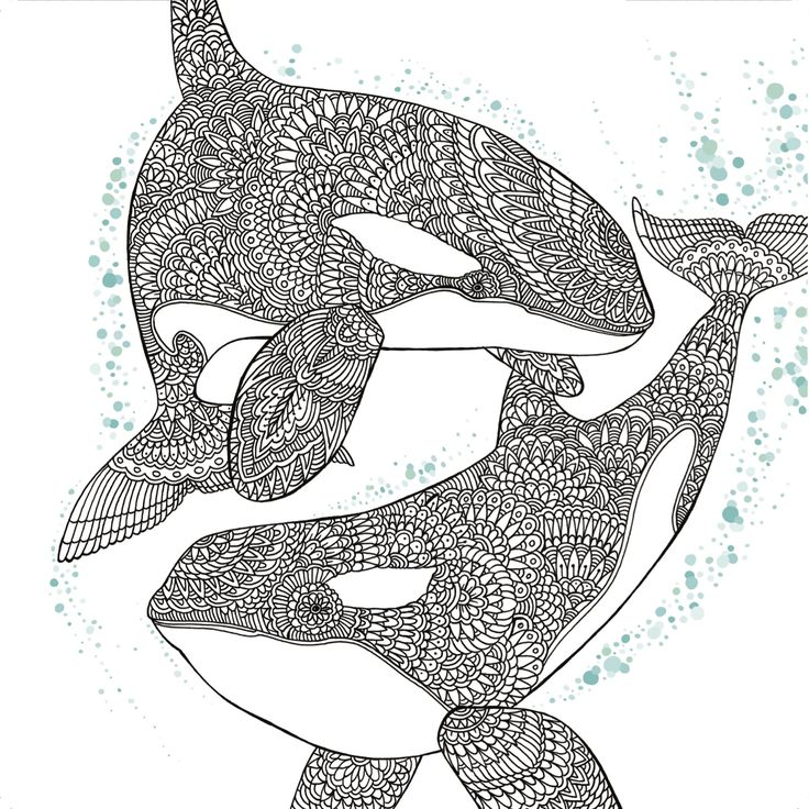 Orca Whale Free Adult Coloring Book Page - Craftfoxes