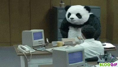 Giant Panda Extinction Animals Giff #861 - Funny Panda Giffs  Funny Giffs  Panda Giffs