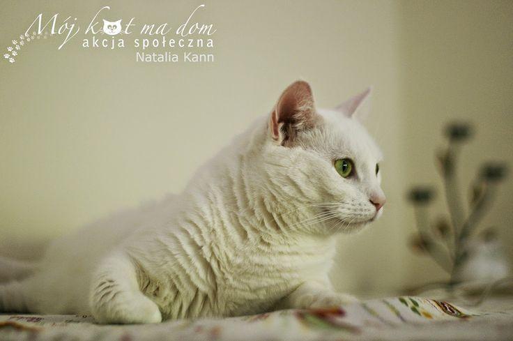 Mój kot ma dom - Akcja społeczna: IV.071