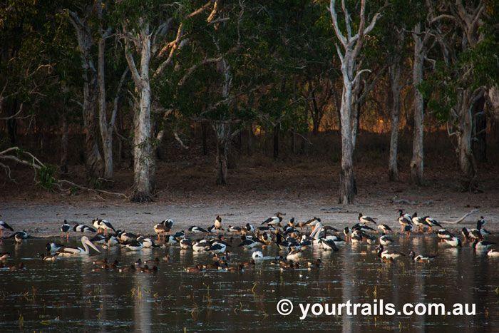 Lotus Bird Lodge, Cape York, Tropical North Queensland, Australia http://www.yourtrails.com.au/