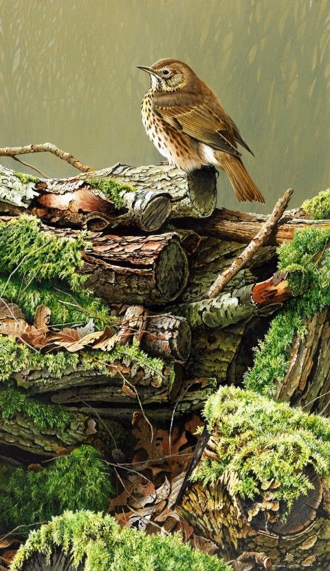 Song Thrush by Terance James Bond