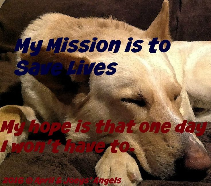 Please help AJA build a shelter for homeless and shelter pets from LA high kill shelters.