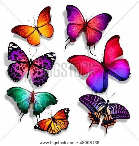 Muchos diferentes mariposas volando, aislado sobre fondo blanco