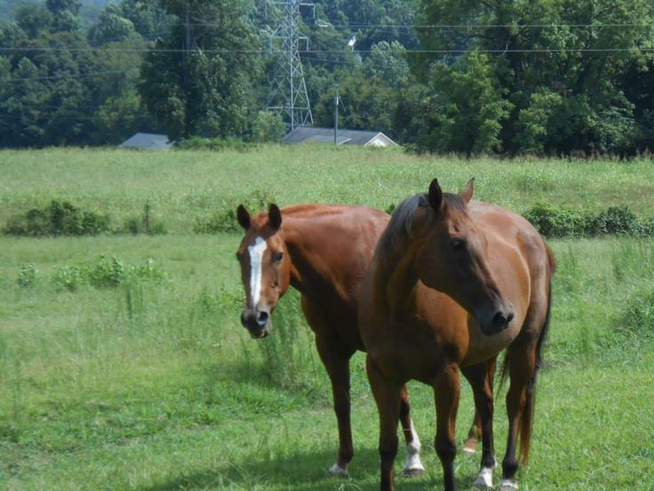 Breaking the Bond:buddy sour horses, Clinton Anderson