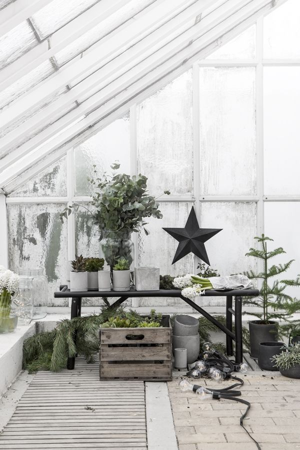 Green Christmas styling | black Christmas stars | fir trees