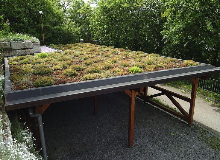25+ Best Ideas About Extensive Dachbegrünung On Pinterest ... Intensive Extensive Dachbegrunung Nachhaltig