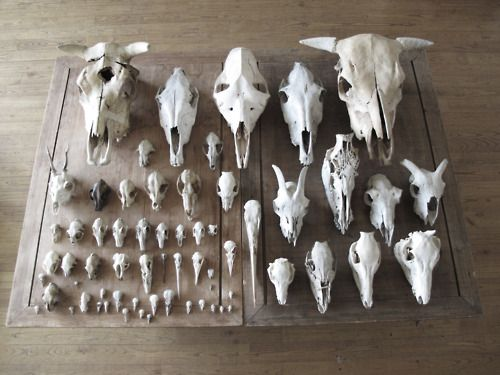 Skulls via adarkershadeofred tumblr on Things Organized Neatly