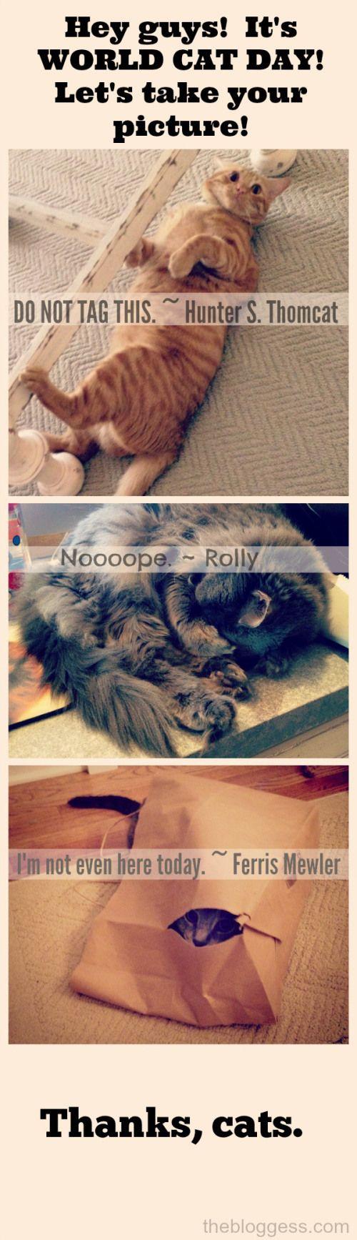 Thanks a lot, cats.  ~ thebloggess.com