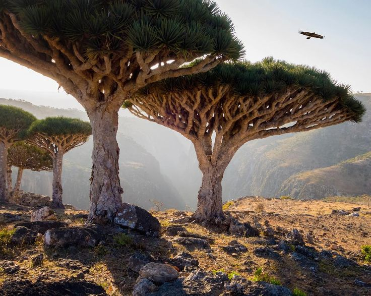 The island of Socotra is located in the Indian Ocean and is technically a part of Yemen. It has sandy beaches, mountains, limestone caves, and incredible biodiversity. 37% of the island's plant species, 90% of its reptile species and 95% of its land snail species do not occur anywhere else on earth. In a way, it is its own world.
