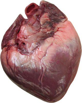 Actual Human Heart