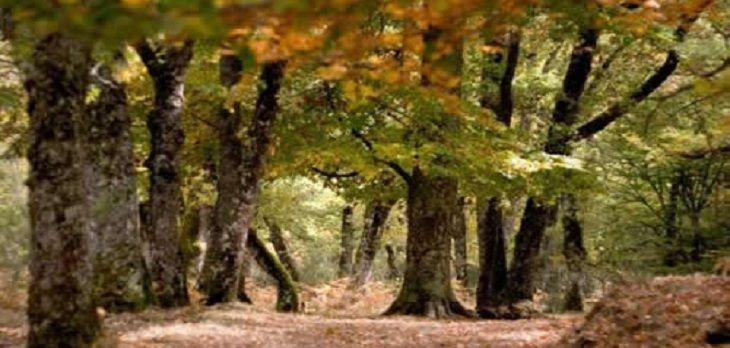 Al norte de la provincia de Madrid nos toparemos con el impresionante Hayedo de Montejo de la Sierra, un precioso bosque de hayas de 250 hectáreas situado