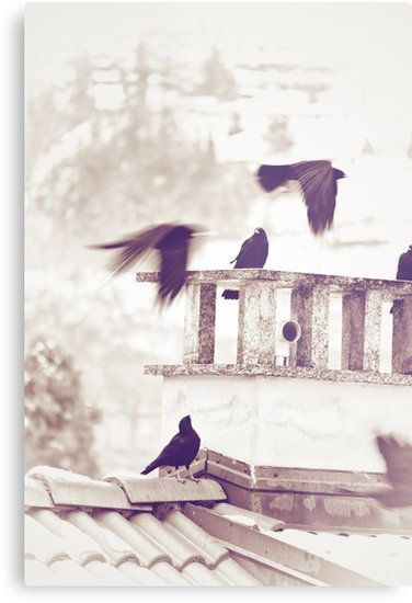 A group of #crows on a roof on a Winter day by Silvia Ganora • Also buy this artwork on wall #prints, #apparel, #stickers, and more. #homedecor #redbubble