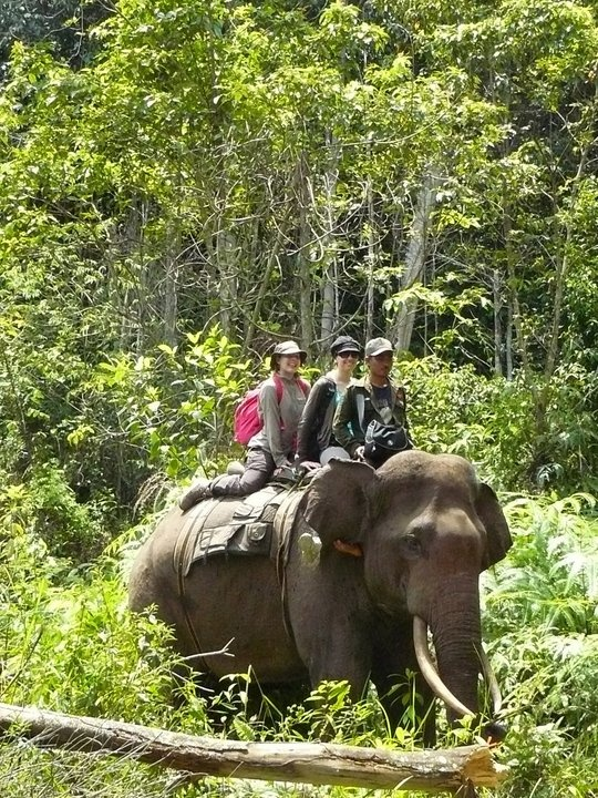 Ecotourism Elephant at TessoNilo NationalPark, Riau Province - Indonesia