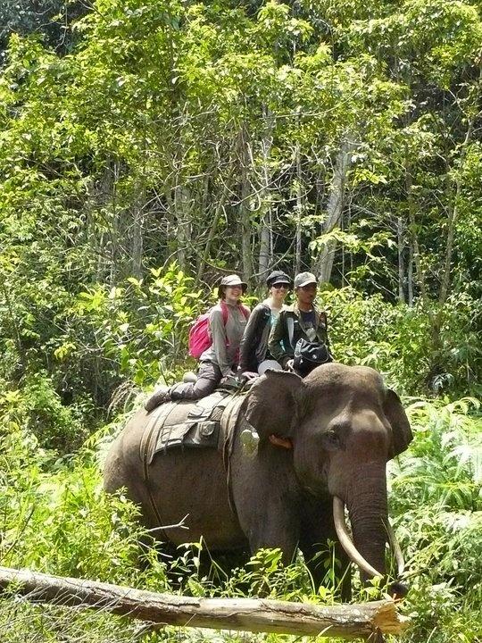 Ecotourism Elephant at TessoNilo NationalPark, Riau Province - Indonesia