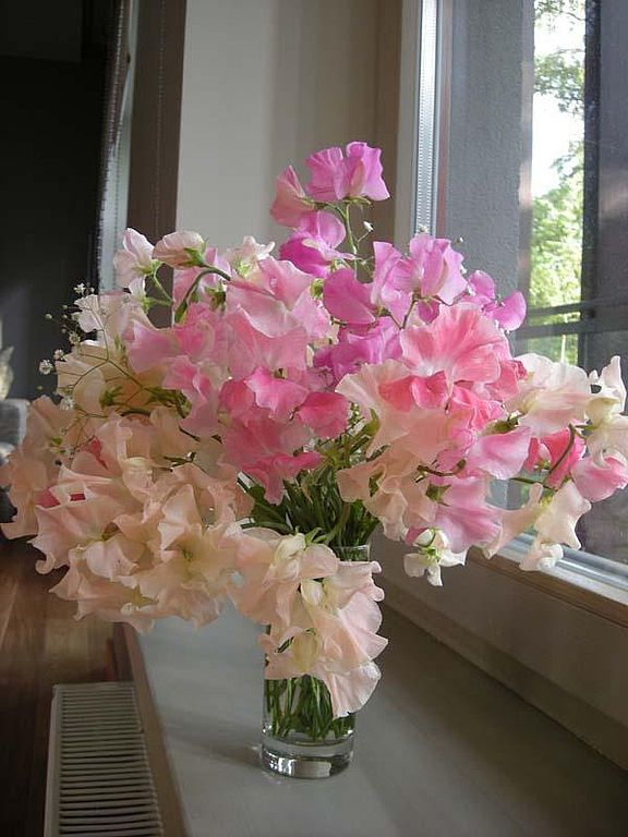 """Купить Букет душистый горошек """"Блеск и Благородство"""". - цветы из полимерной глины, цветы ручной работы"""