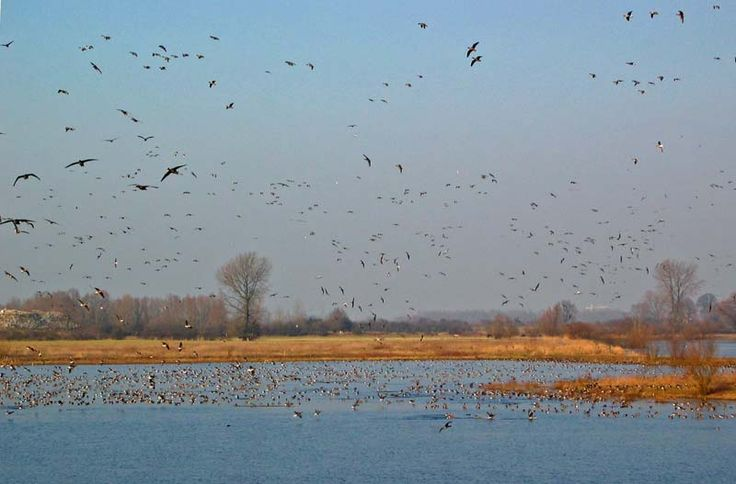 Oude Waal, Ooij near Nijmegen