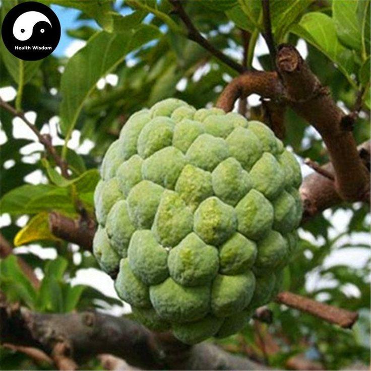 buy annona squamosa fruit tree seeds plant sweetsop sugar apple
