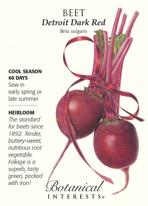 Growing Beets A Complete Guide On How To Plant Grow Harvest Growing Beets Beet Seeds Beet Plant