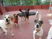 101 mascotas: Guarderías para perros