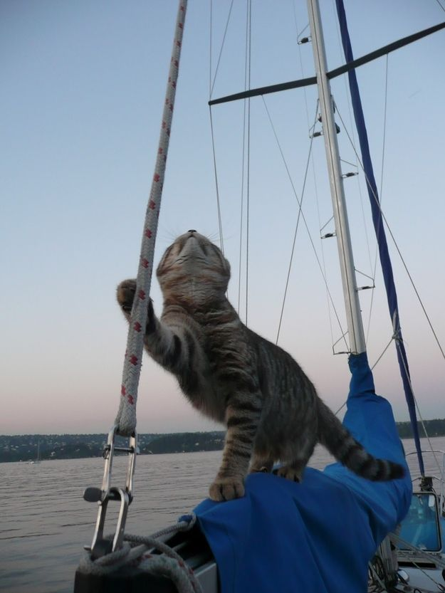 A sailboat works, too | Community Post: 18 Animals Who Love Spring Break