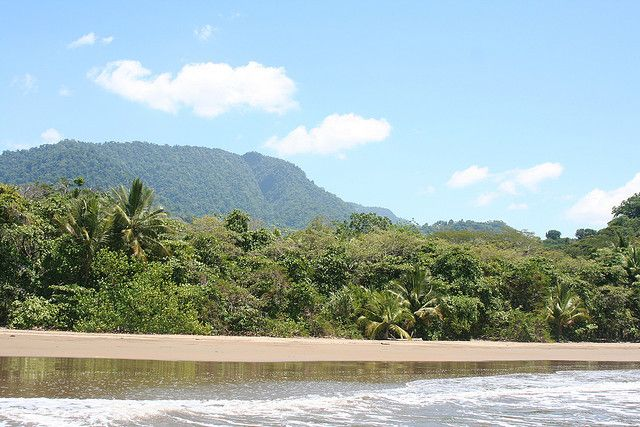 Il n'y a pas meilleur endroit au Costa Rica et peut-être dans le monde pour l'observation des baleines à bosses que le Parc National Maritime Ballena. DÉTAILS  Tarif : 6$/personne/jour à régler auprès du poste de gardes forestiers. Tel : 506-2786-7161 Superficie : Terrestre : 2,3 km2 / Maritime : 54 km2 Horaires d'ouverture : tous les jours de 8h à 16h Temps de visite : 1/2 journée