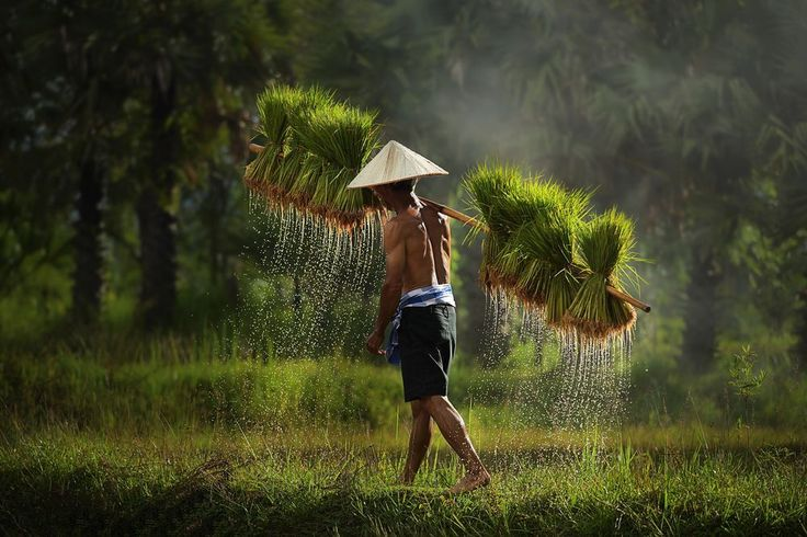 farmer Photo by Atipan Khantalee — National Geographic Your Shot
