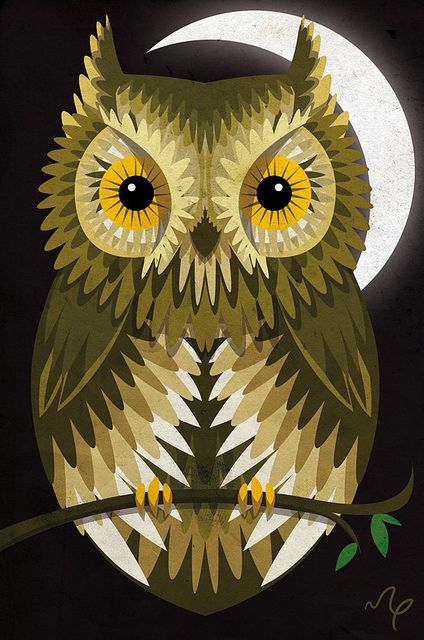 owl by Marcos Piccin